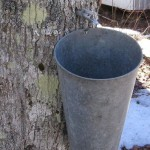 1280px-Maple_syrup_bucket