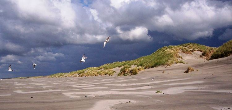 Terschelling Beach, Friesland, Holland