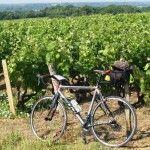 Loire Vineyard