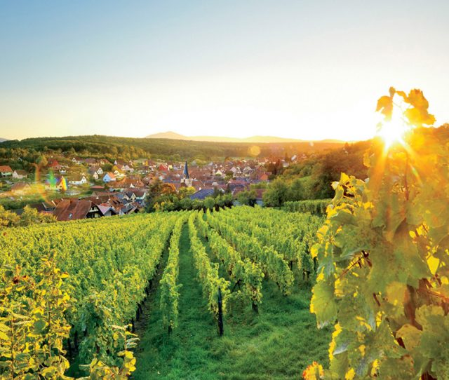 Alsace Region Vineyards on bike adventure