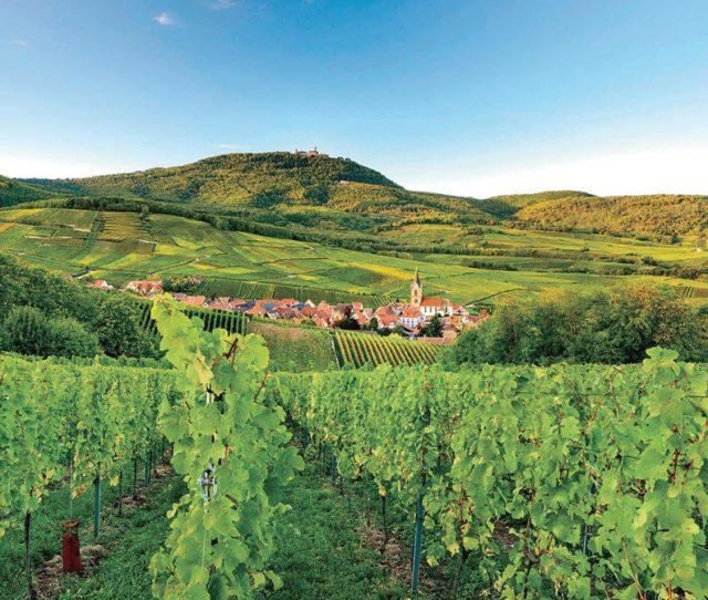 Rhine River Valley | Alsace Bike Tour VBT