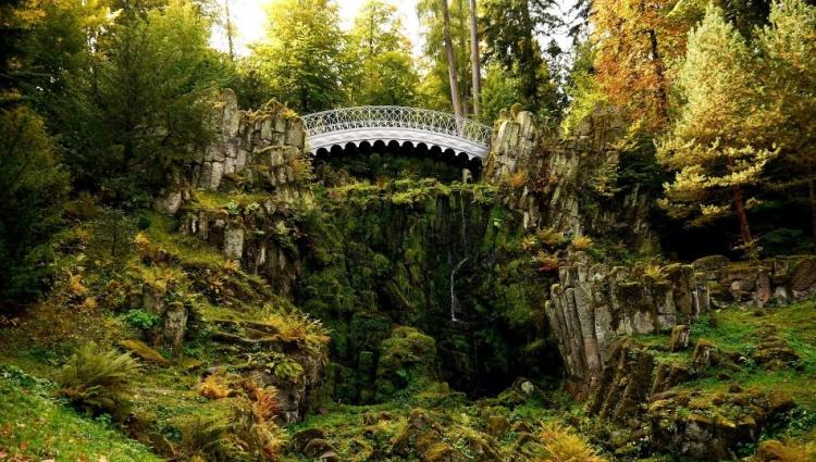 Black forest flora; VBT Alsace & Black Forest biking tour