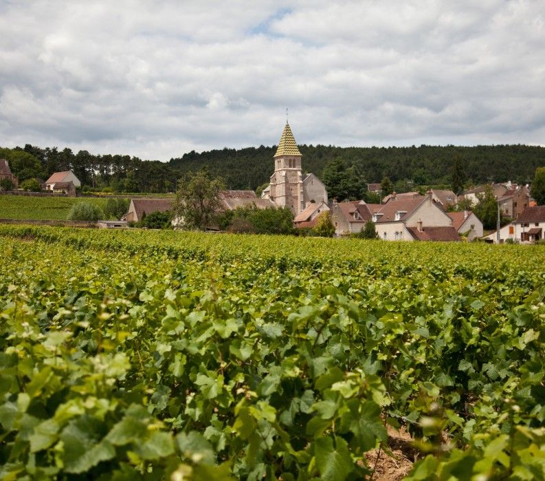 France Burgundy wine bike tour; VBT