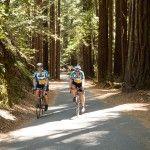 Biking in the California Redwoods