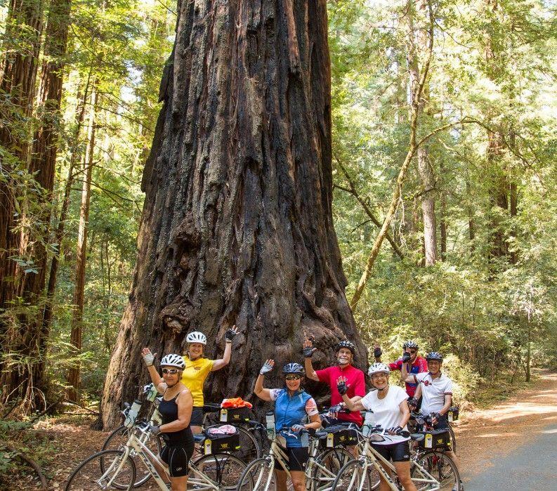 The Redwoods in California