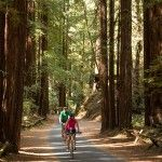 Biking through the redwoods