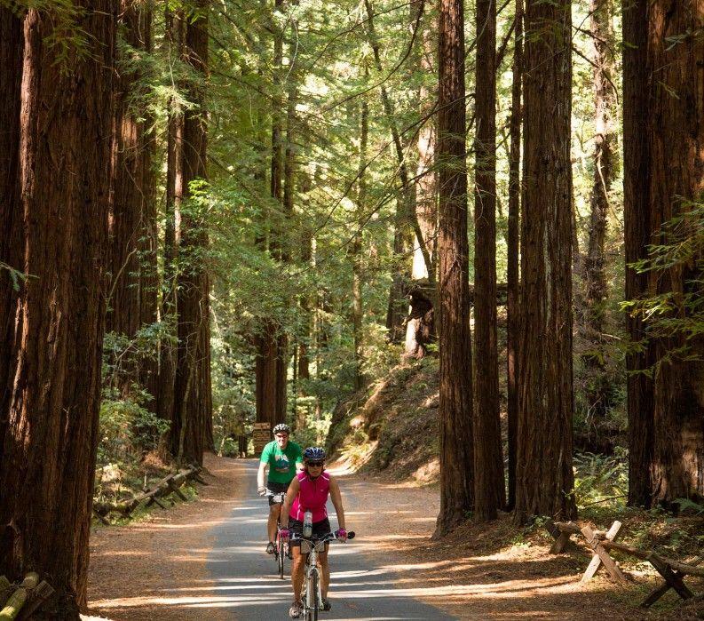 Biking through the redwoods