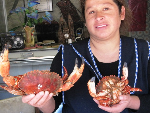 Crabs in Zapallar