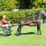 Classic Vermont Biking Tour, Morgan Horse and Carriage