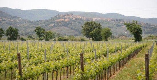 Gregg--Vineyard Tuscan Coast