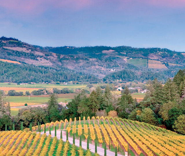 California Wine Country a great Group Bike Tour