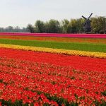 Spring Flowers, Keukenhof, The Netherlands Bike Tour