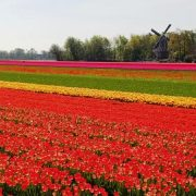 Spring Flowers, Keukenhof, The NetherlandsBike Tour