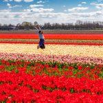 Holland in the Springtime Bike & Boat: Aboard Magnifique