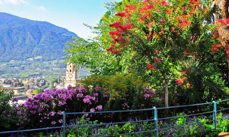 Spring flowers, VBT Italy Dolomites Bike Tour