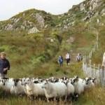 Ireland walking