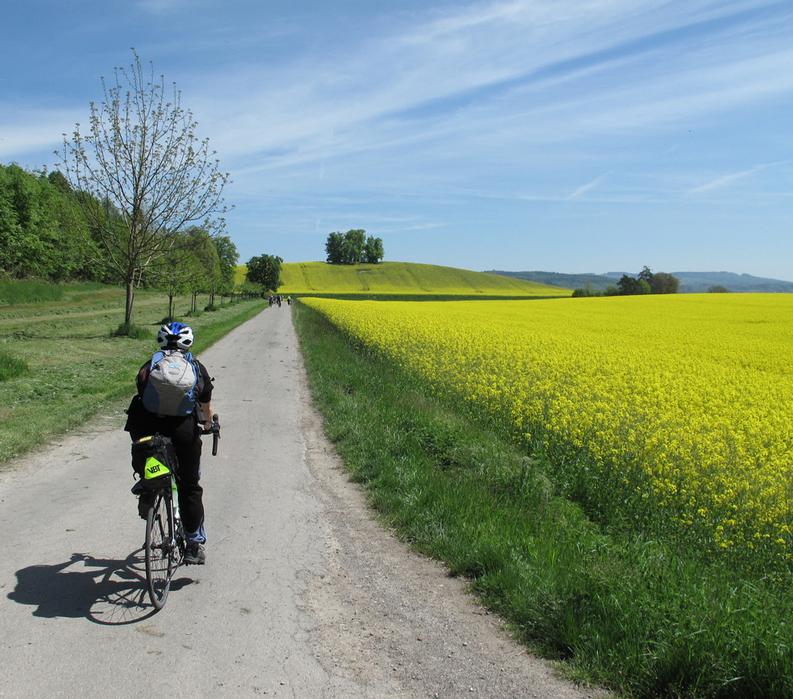 Lake Constance: Germany, Austria & Switzerland - Biking along a field of flowers