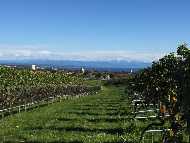 Lake Constance, Germany, orchard, VBT