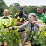 Italy, vineyard