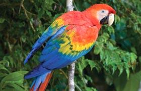 Post Trip Peruvian Amazon