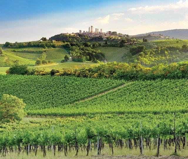 Ride Tuscan Vineyards on your bike trip