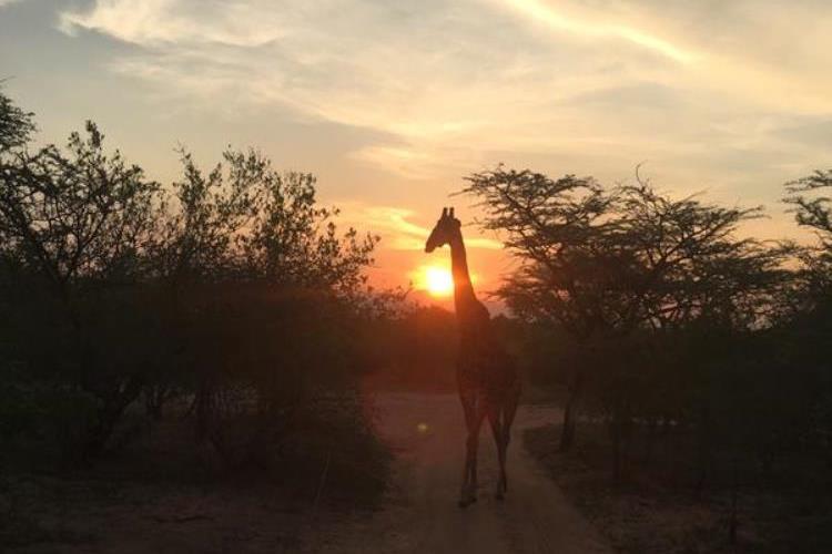 south africa giraffe pre-trip