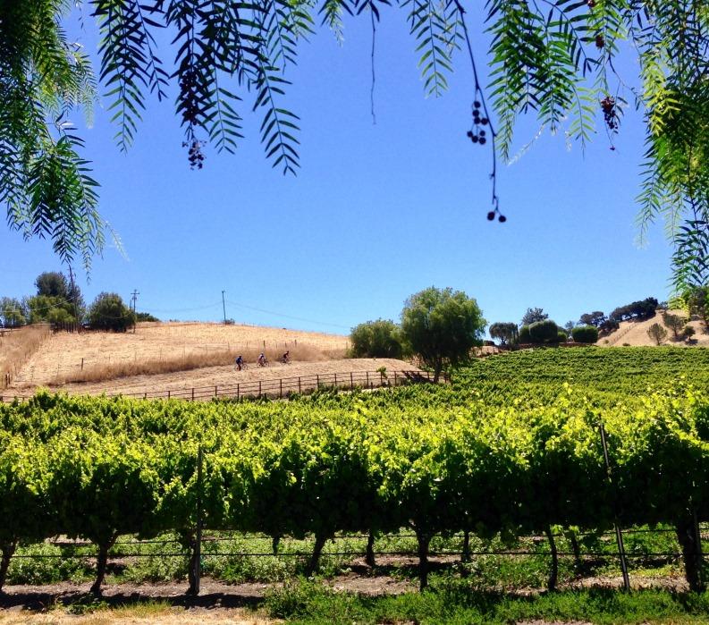 Santa Barbara, vineyards, cyclists, VBT