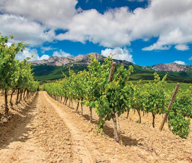 Spain: Basque, Navarre & Rioja Wine Regions