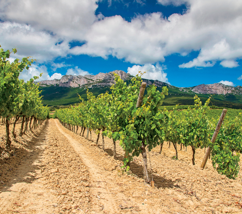 Spain, Basque, Navarre, and Rioja Wine Regions