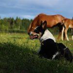 New Zealand Sheepdog, VBT Bike and Walk Tour, blog