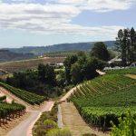 South Africa Wine Region, VBT Blog
