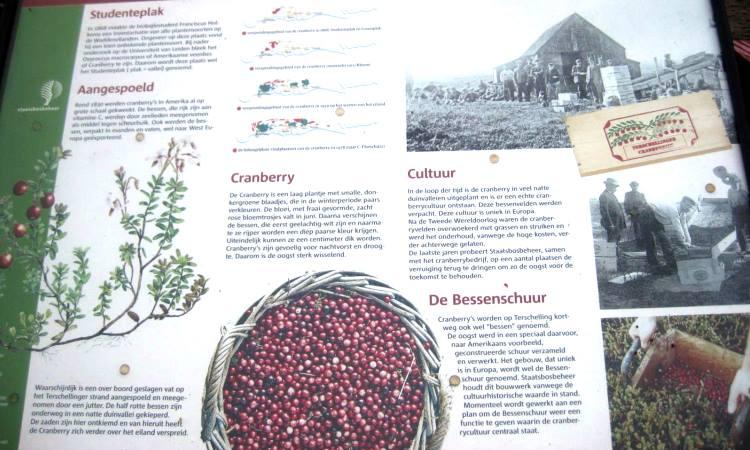 Texel Cranberries, blog