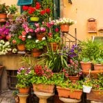 The Tuscan Coast, Italy. Flowers in town.