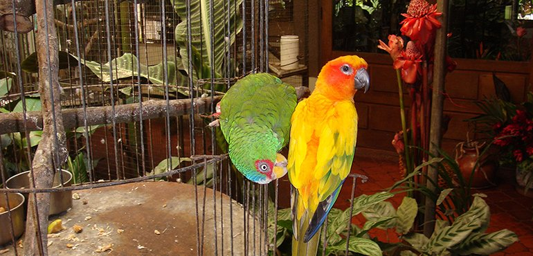 Visitng Macaws in Cost Rica