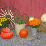 Vermont: Champlain Valley and Islands, Pumpkins and Mums
