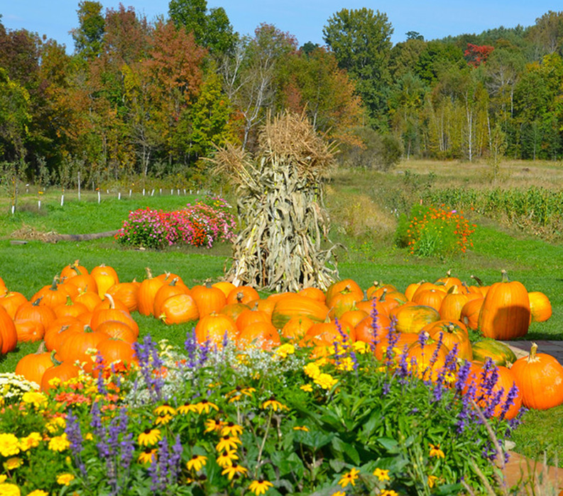 Vermont: Champlain Valley and Islands, pumpkins and flowers