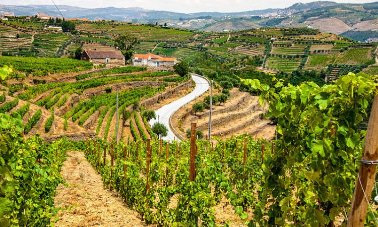 Douro Valley Wine, Portugal Walking Tour