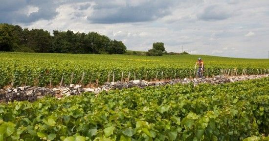 Vineyard Ride