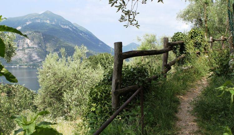 WayFarer Trail