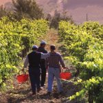 wineworkers, tuscany, chianti, wine, blog