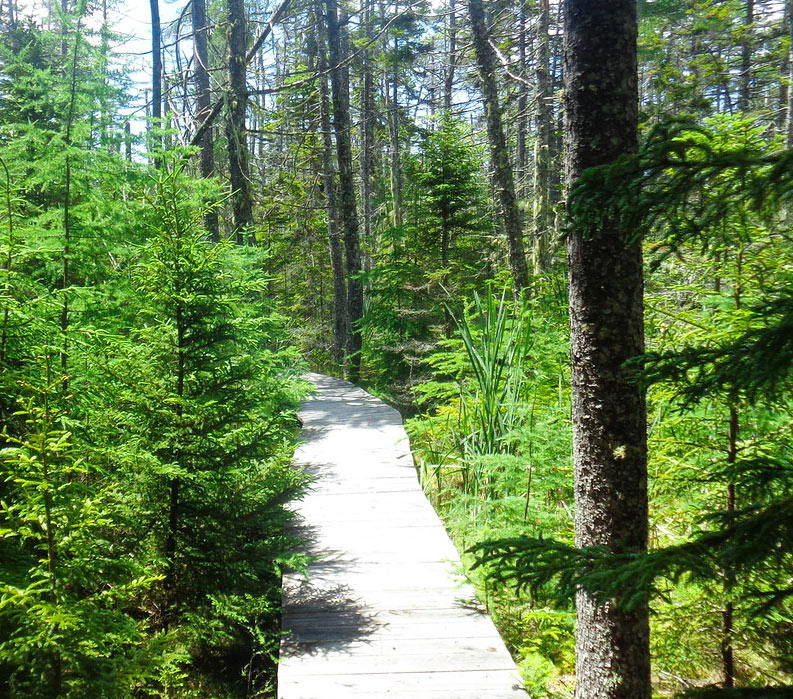 Paths through the woods in Acadia