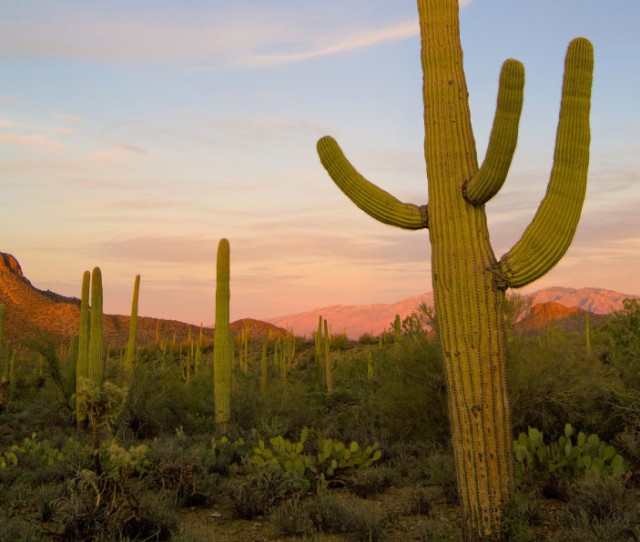 New Tour: Arizona: Saguaro National Park &  the Sonoran Desert