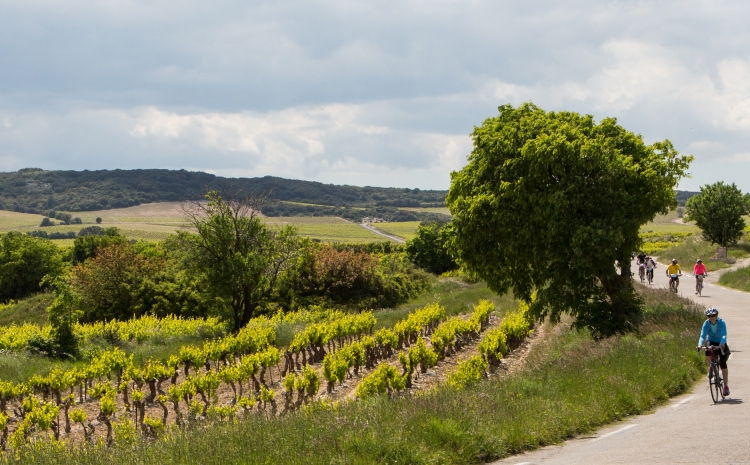 Lirac vineyrad cycling, VBT Provence biking tour