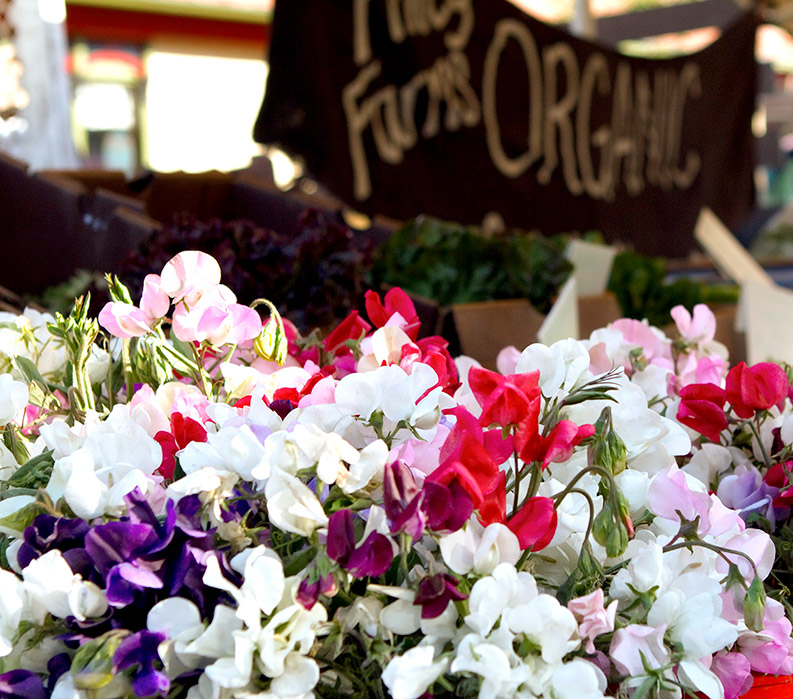 Sweet Pea flowers at California Market