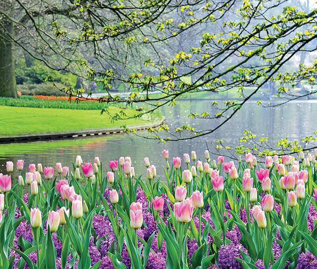 Holland in Springtime