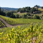 Napa Valley Vineyards, Top North American Vistas, VBT