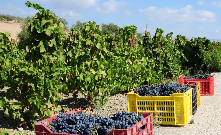 sicily wine, italy