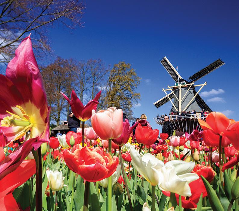 Holland + Belgium