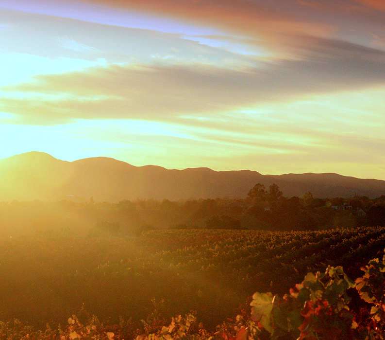Wine Country Sunrise