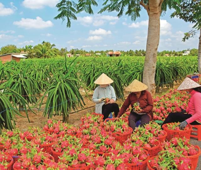 vietnam_secondary-2